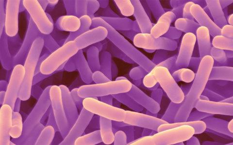 Бактериальный пробиотик помогает снизить уровень стресса и улучшить память