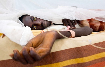 В Африке бушует желтая лихорадка