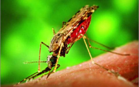 10 фактов о малярии (по данным ВОЗ на 12.04.2016г.)