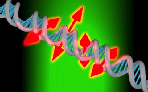 Показаны снимки ДНК высокого разрешения