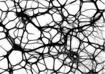 Лекарство от рассеянного склероза победит стойкие бактерии