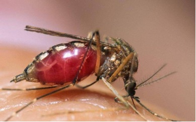 Исследователи знают, как победить комаров, распространяющих болезни