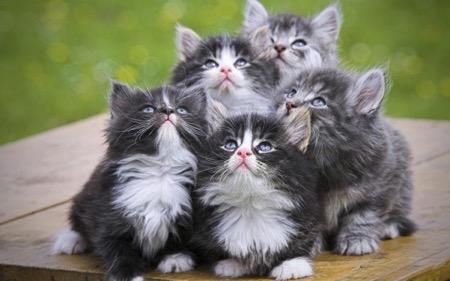 Кошки подскажут медикам, как победить ВИЧ