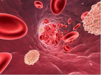 «Хороший» холестерин связали с инфекционными заболеваниями