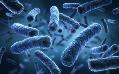 Ученые подсчитали число штаммов неуязвимых супербактерий в России