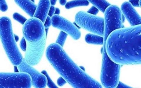 Оказалось, что о безопасности пробиотиков почти ничего не известно