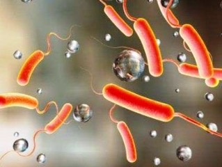 Старейший холерный вибрион оказался устойчив к пенициллину еще до открытия антибиотиковx