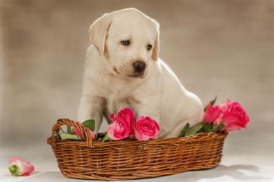 Если в доме живет больная собака, все члены семьи находятся в опасности