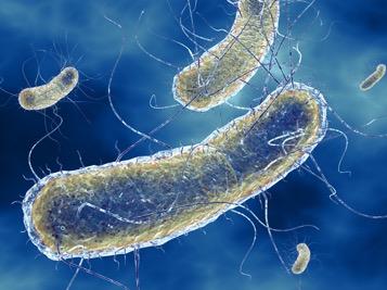 Биологи опробовали новый метод борьбы с устойчивыми инфекциями