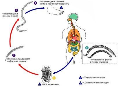 Кишечные паразиты оказались спасением от рассеянного склероза