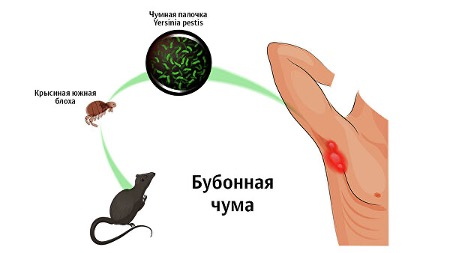 Бубонная чума обнаружена в Денвере (Колорадо)