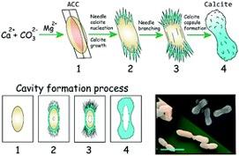 Отечественная разработка поможет в лечении бактериальных инфекций